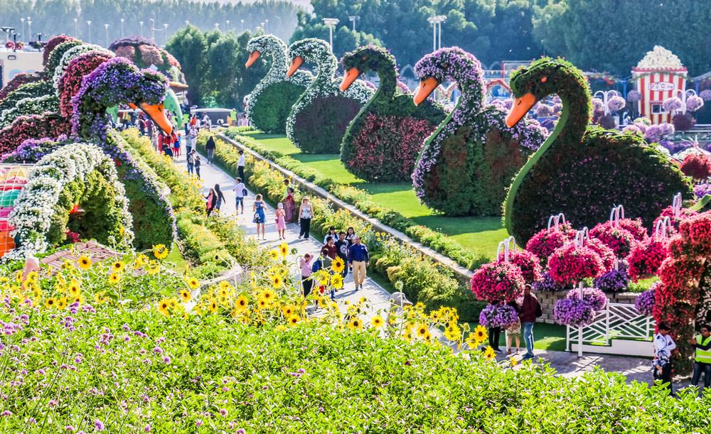 Floral Design at Dubai Miracle Garden By VisaDekho